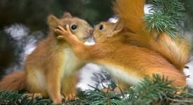 Squirrel-Love